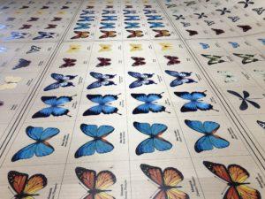 Butterflies printed on wood veneer
